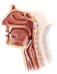 head_neck